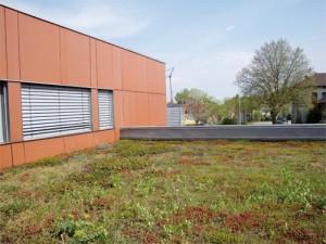 Terasse végétalisée au dessus des Bureaux de Maurice DI GIUSTO à Mulhouse-Dornach