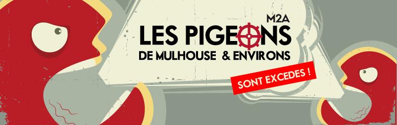 pigeons de mulhouse ariane n 39 est plus zen le p riscope. Black Bedroom Furniture Sets. Home Design Ideas