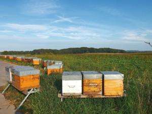 Alsace, apiculteur, MIEL, ruche, Sundgau, Riche