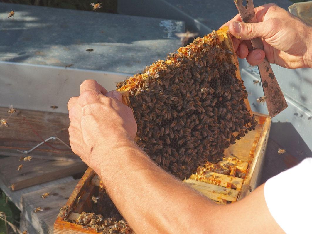 apiculteur d'alsace