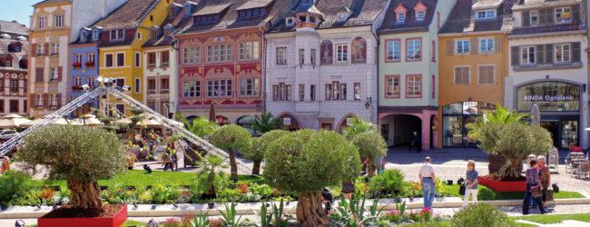 Mulhouse, commerce, Frédéric Marquet