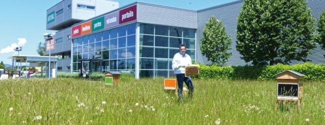 Pronectar, installation de ruche dans les entreprises