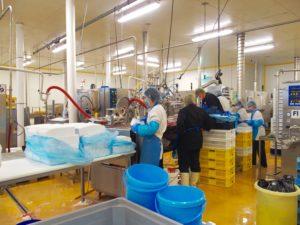 Les mélanges épaissis et refroidis sont ensuite insérés l'un après l'autre dans un moule plastique selon les recettes, par exemple ici une glace framboise, et une glace vanille (photo de loin, secret de fabrication).